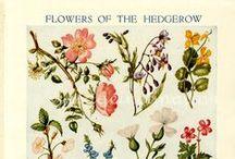 Vintage Prints & Botanical Illustrations