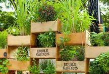 Gardens: Vertical / A variety of indoor and outdoor vertical gardens