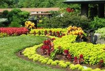 Gardens: Incredible Edible / Beautiful Edible Gardens