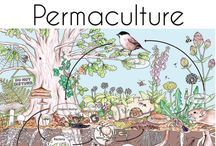 Food Forest/Permaculture Guilds
