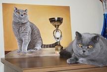 My British cats