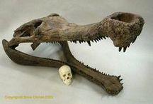 Fossils and Geology / by Ella Wray-Carnes