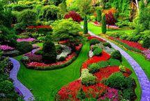 Garden & Outdoor / by honeybee