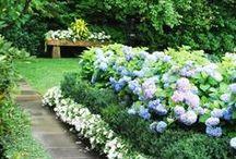 Garden Inspiration / by Fireside Flowers