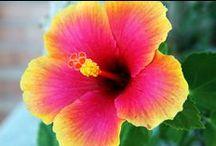 ❀ Flowers Photography ❀ / Fotos artisticas con flores y fotografia al natural.
