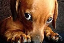 •♥• Dogs Photography •♥• / I love the dogs!