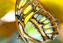 εїз Butterflies Photography εїз / Me encantan las mariposas!