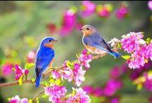 ( '' )> Birds Photography <( '' ) / Me gustan los animales! Amo a los perros y me encantan los peces, los pajaros y las mariposas.