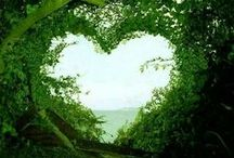 ♥ Forests and nature ♥