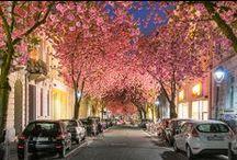Night in the city...shining...