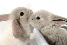 Bunnies / Bunnies