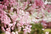 ~ The pink garden ~