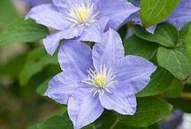 ~ The blue garden ~