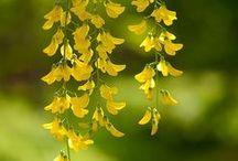 ~ The yellow garden ~