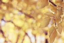 Autumn soft...mood in yellow shades...