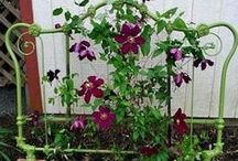 Fun Ways to Display Clematis / there are so many beautiful clematis to select from, and so many unique and fun ways to display them