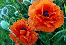 flowers / by Sharon Woodhead Leo