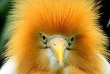 birds / by Sharon Woodhead Leo
