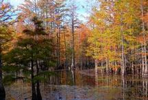 Fall Pictures of Lumberton / Images submitted by our office staff and the generous citizens of Lumberton.