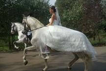 Casaments a Can Vila