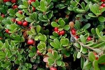 Plants for Shoreline