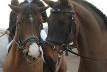 Sant Antoni 2013 / Els nostres amics i clients ens acompanyen a Sant Esteve a beneir els animals per Sant Antoni.