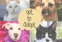 Opt to Adopt! / Toledo Area Humane Society's adoptable dogs and cats:  http://www.toledoareahumanesociety.org/petharbor