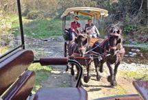Picnic amb carruatge / ¡En nuestra hípica se puede disfrutar de un domingo soleado con los caballos de muchas maneras! ¡Mira qué bien se lo han pasado nuestros clientes el domingo pasado de picnic!! La #primavera es ideal para salir a disfrutar del #Montseny!! www.hipicacanvila.com