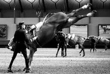 Cadre Noir Gala d'ouverture 2014 / Chevalannonce dans les coulisses du Cadre Noir de Saumur lors du Gala d'ouverture 2014