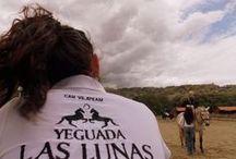 Concurso de Doma Clásica CDT0* + CDT1* 29/06/14 / Concurso de Doma Clásica CDT0* + CDT1* que celebramos el 29 de Junio en #HípicaCanVila. ¡Así de bien lo pasamos! #MomentosCanVila #Hípica #Montseny  www.hipicacanvila.com