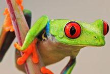 Animalia! / by Saffron Galleria