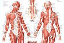 Topology and Anatomy