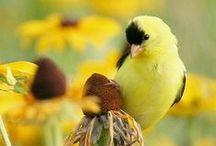 Ref. - Birds