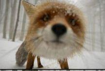 Ref. - Foxie