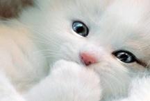 Hello Kitty / by Sophia