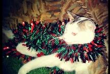 my cat <3 / #cat http://inst.ag/u/kassandrakassi/p/SjI_3bsXbM