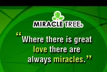 Believe in Miracles with Moringa! / Find inspiration in our collection of Miracle themed quotations!