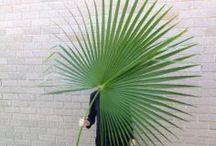green / by Fliss Dodd