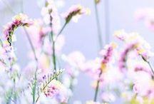 Beautiful / by Sara Lavigne