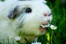 Cute pets / by ibana