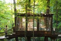 Treehouses / by Vivien Eliasoph
