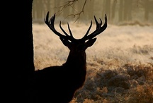 Deer for My Dear :) / by Lisa Carolus