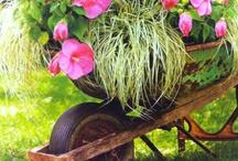 wheelbarrow fun / by Kim Hodges