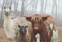 Fauna / Animals I Want to Snuggle