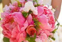 Flowers / by Annie Torr