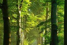 Trees / by Brenda Frazier