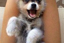 Cute puppy / oooooooooh so CUTE