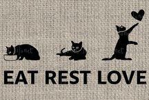 Katzen ❤