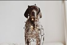 German Shorthaired Pointer / German Shorthaired Pointer Dog. // Best in Shore sells eco-friendly, block-printed paper and textiles to generate funds for small, independent animal rescue organizations. www.etsy.com/shop/BestInShore