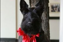 Scottie Dog Love / Scottish Terrier Love! // Best in Shore sells eco-friendly, block-printed paper and textiles to generate funds for small, independent animal rescue organizations. www.etsy.com/shop/BestInShore